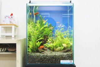 繁殖しやすい熱帯魚ベスト3!卵、稚魚をうまく隔離飼育する方法も