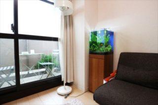 一人暮らしのアクアリウム、お勧めの水槽や魚、注意点も