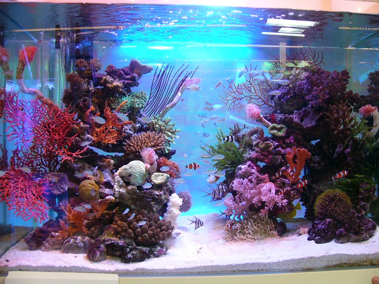自作のバックスクリーンを熱帯魚水槽に貼ってみようメリットとポイント