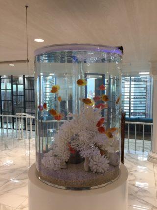 熱帯魚の飼育 入門編、飼育しやすい熱帯魚はこれだ!!