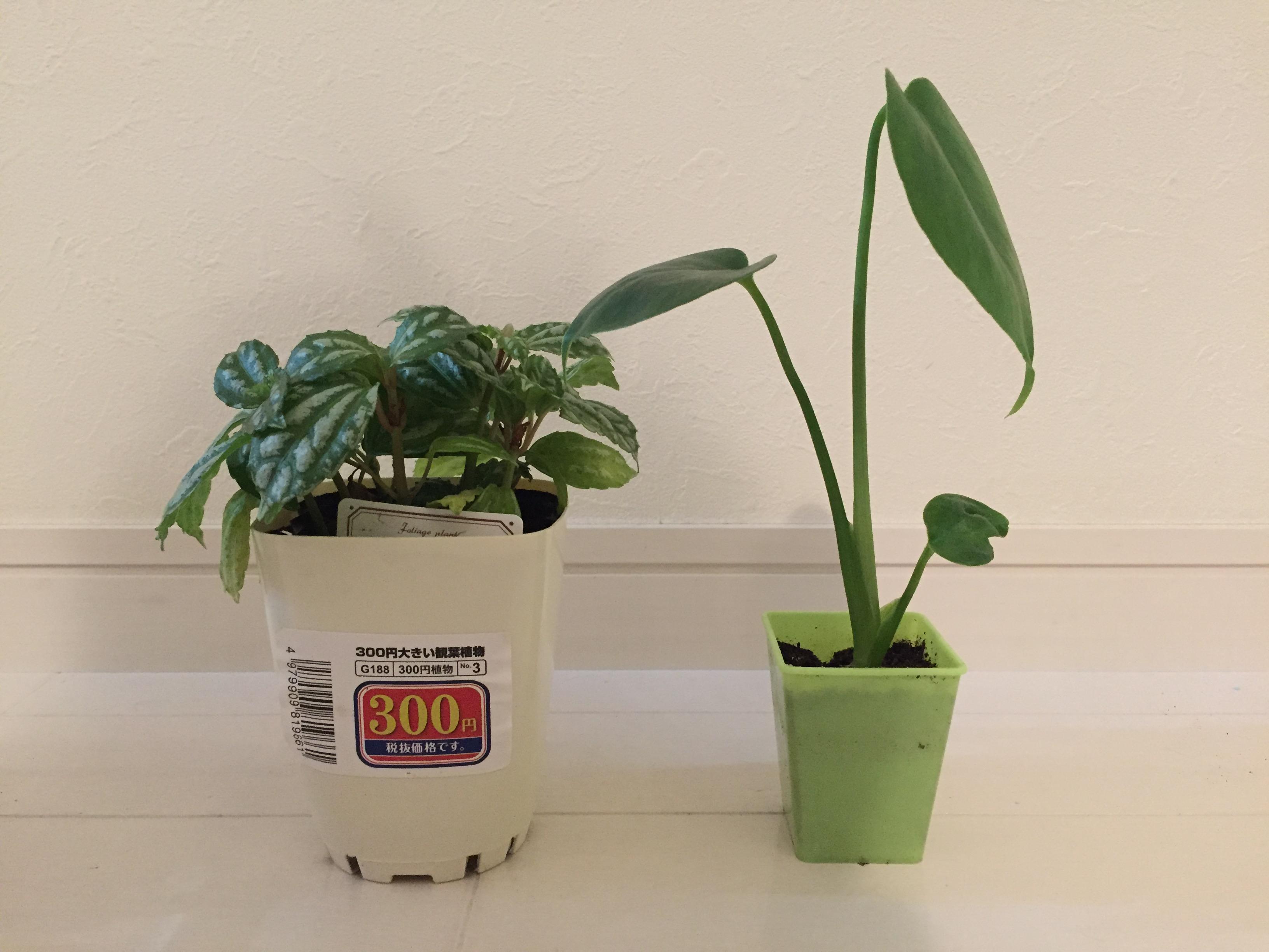 観葉植物2点