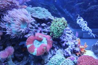 【美しいサンゴ水槽】プロのレイアウト事例をご紹介します