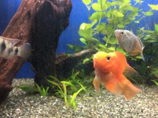 魚たちは何が好き?生餌のススメ(淡水魚編)