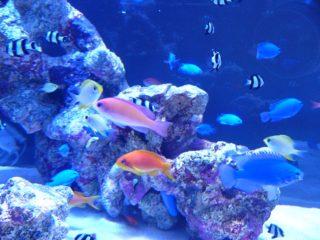 熱帯魚は何年生きる?熱帯魚の寿命について