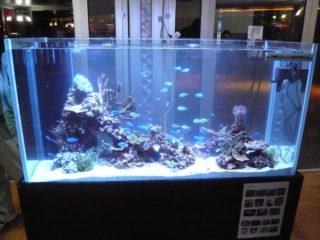 こんなに変わる!熱帯魚をおしゃれに見せる水槽レイアウト術とは