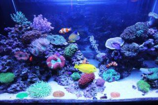 サンゴ飼育における「蛍光灯」の重要性