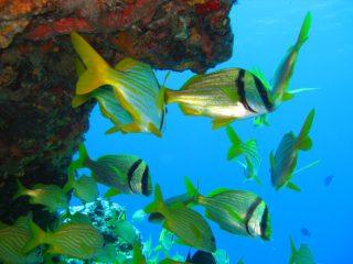 熱帯魚と熱帯魚 飼育のすべてがわかる!