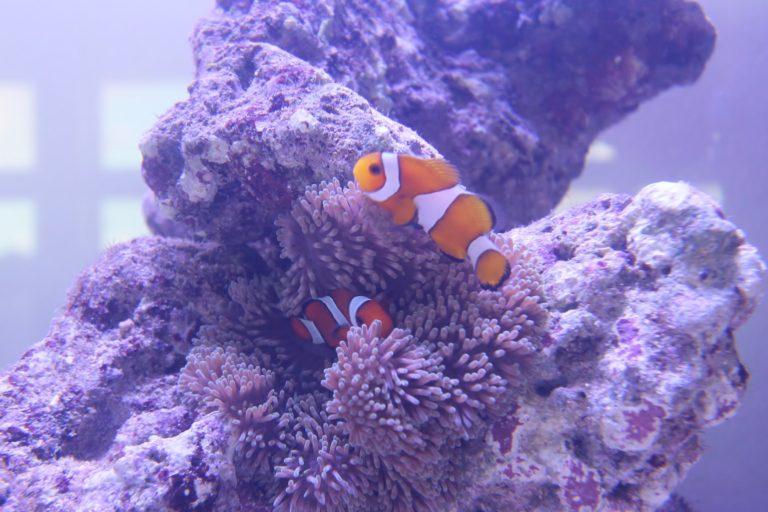 トロピカ「【プロが教えます】熱帯魚が病気にかかりやすい水槽の特徴とは!?」