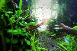 熱帯魚の組み合わせ!水槽の上?下?泳ぐ場所で魚の種類を選ぼう!