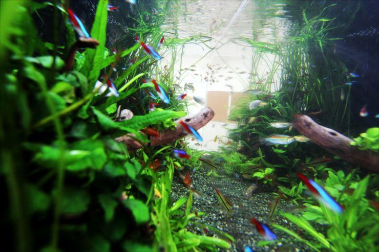 トロピカ「熱帯魚の組み合わせ!水槽の上?下?泳ぐ場所で魚の種類を選ぼう!」