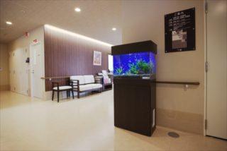 熱帯魚水槽を買うなら、レンタルも考えるべき5つの理由!