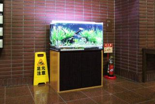 熱帯魚水槽の照明時間に要注意!コケや水草への影響は?