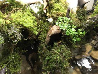 【画像で解説】アクアテラリウムに使う素材(砂・陸地・滝・植物)とは