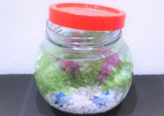 ボトルアクアリウムで小さな水族館を作ろう