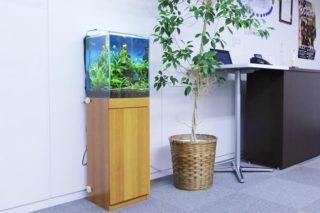 小型水槽向きの熱帯魚の特徴