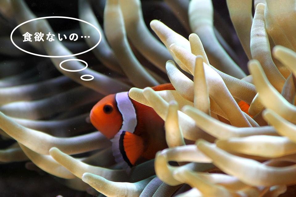 熱帯魚が餌を食べない!どんなとき?