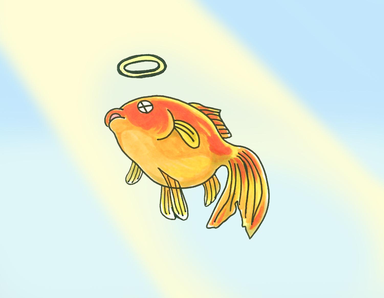 死に そう 金魚
