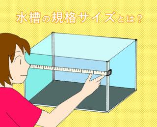 熱帯魚水槽の規格サイズとは【総まとめ】