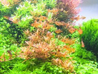 状態の良い熱帯魚の選び方 5つのポイント!