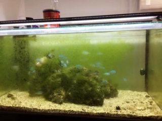 熱帯魚水槽や水草に付着する嫌なコケ・しつこいコケを撃退する3つの方法