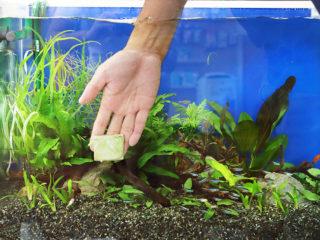 【初心者向き】水槽のコケ対策と種類をプロがアドバイス!