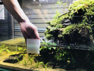 アクアテラリウム水槽を美しく維持管理する正しいお掃除手順法!!