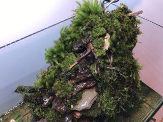 滝のあるアクアテラリウム水槽の作り方⑥ ~レイアウト実践 後篇~