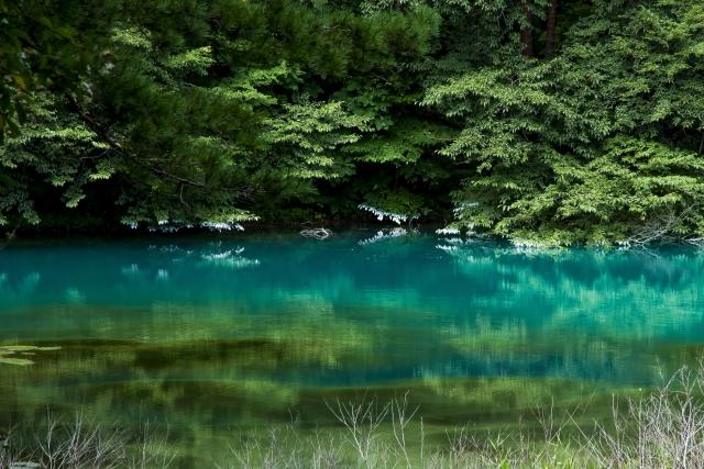 湖畔 湖 深緑