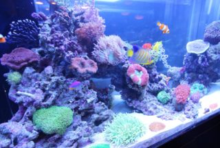 サンゴを発光させるには! 美しい蛍光色にするポイントと方法を解説します