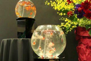 アートアクアリウムのような水槽を再現