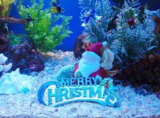 クリスマスの水槽レイアウト事例