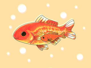 金魚のカープくんとは・話題!エサ用から大出世