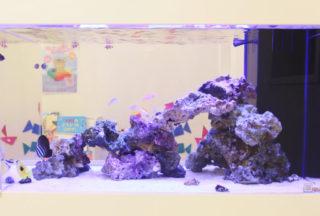 熱帯魚混泳の相性