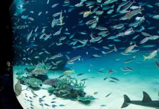 【なぜ死んだ?酸欠の原因をプロ目線で解説】サンシャイン水族館で大量死