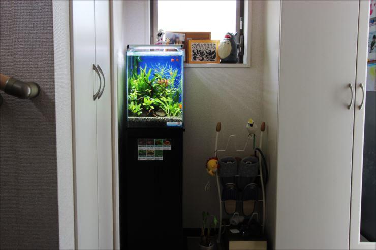 小型水槽設置事例② 東京アクアガーデン