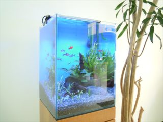 熱帯魚水槽に必要な照明時間はどのくらい? 魚や水草の調子に影響します!