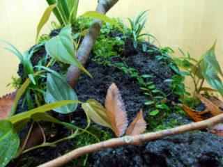 【初心者向け】テラリウムの作り方!生き物を入れて植物と一緒に楽しもう!