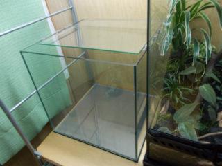 熱帯魚水槽の立ち上げ初期によくあるトラブルと対処法