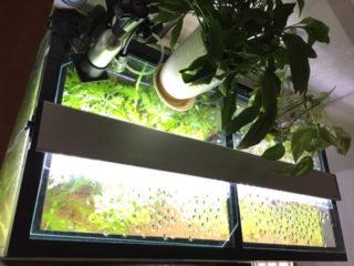 水草水槽用照明は蛍光灯がおすすめ!?LEDやメタハラと比較してみた