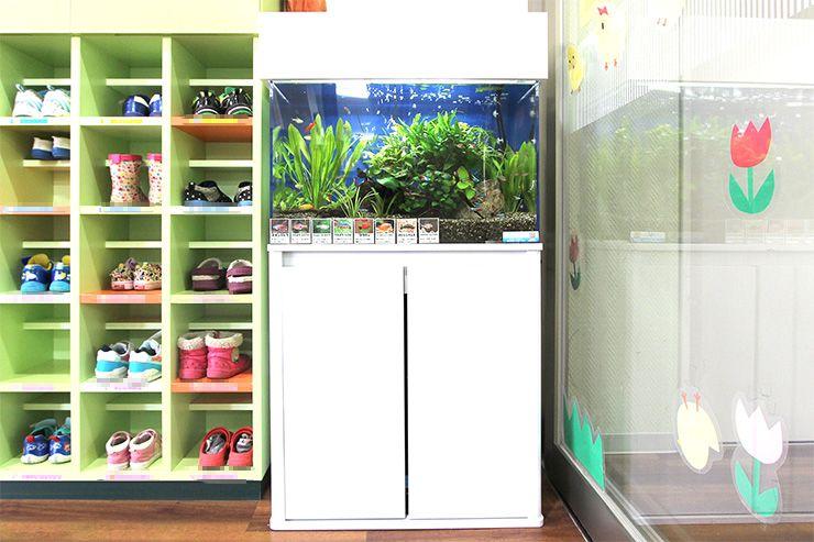 金魚と熱帯魚は一緒に飼える? 画像元 東京アクアガーデン 水槽と長靴 保育園