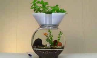 水質管理にお勧め! 水槽で出来る野菜や植物の水耕栽培