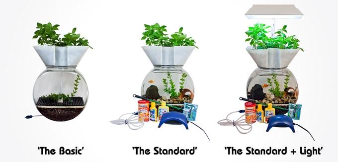 水槽 水耕栽培 金魚 熱帯魚 メダカ アクアポニック 小型水槽 野菜 植物
