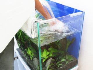 熱帯魚水槽の水換えは毎日行うべき?最適な頻度や換水量とは