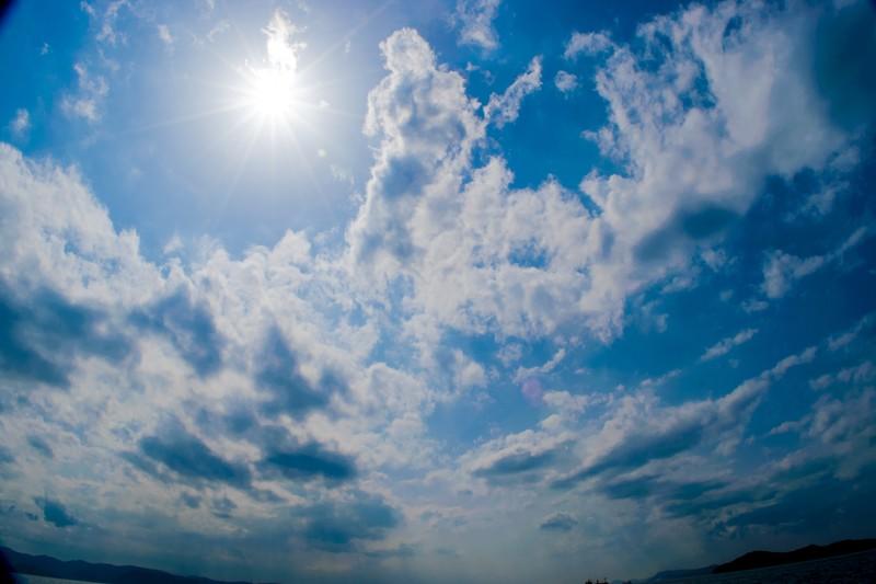 夏 直射日光 ウーパールーパー