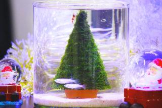クリスマスはモスツリーで水槽レイアウト