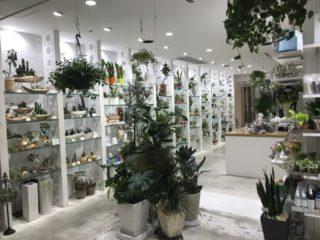 【プロが教える】良い熱帯魚店(ショップ)の選び方とは!?