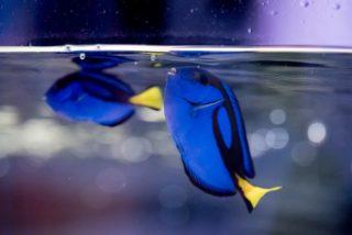 熱帯魚や金魚に餌をあげる時の注意点やポイントとは?