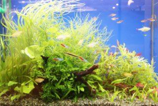 60cm水槽に最適な熱帯魚の数とは?計算方法と考え方について