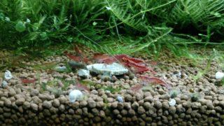 熱帯魚飼育にオススメの魚に良い餌の種類とエサのあげかた