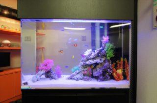海水魚水槽がきれいに見える おすすめのLEDライト